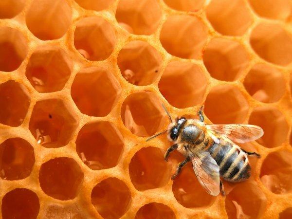 http://www.enviro2b.com/wp-content/uploads/Faune/abeille_ruche.jpg