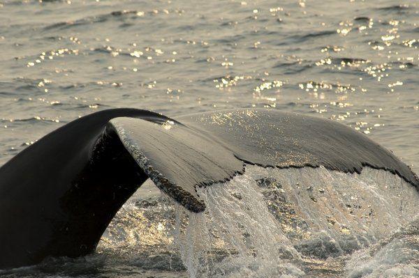 Les mammifères marins, victimes de Fukushima