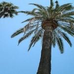 palmier, contre-plongée