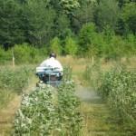 OGM - Dévitalisation de l'essai sur des peupliers - Inra
