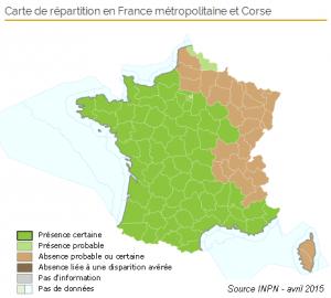 Carte de frelons asiatiques en France