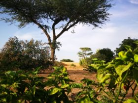 Sénégal Écologie