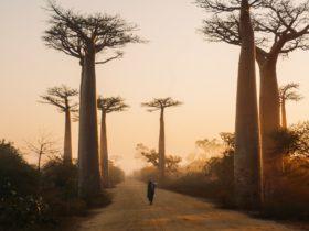 Madagascar crise famine réchauffement climatique