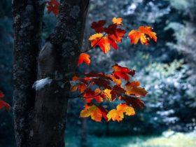coupe rase épiphénomène utile aux forêts ?